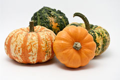 Pumpkins. Four pumpkins on white background Stock Photography