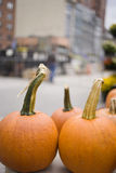 Pumpkins. Two orange pumpkins on the table close up Royalty Free Stock Photo