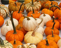 Pumpkins. On bavarian thanksgiving market Stock Photography