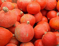 Pumpkins. On bavarian thanksgiving market Stock Photos