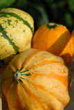 Pumpkins. Group of pumpkins in autumn time Royalty Free Stock Image