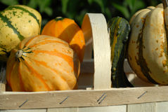 Pumpkins. Group of pumpkins in autumn time Royalty Free Stock Photos