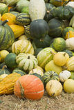Pumpkins. Vegetables Harvest of all kinds of pumpkins Royalty Free Stock Photography