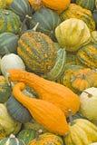 Pumpkins. Vegetables Harvest of all kinds of pumpkins Royalty Free Stock Images