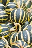 Pumpkins. Vegetables Harvest of all kinds of pumpkins Stock Photos