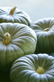Pumpkins. Lit From Behind royalty free stock photo