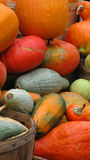 Pumpkins. Lots of pumpkins still life Royalty Free Stock Photo