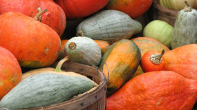 Pumpkins. Lots of pumpkins still life Royalty Free Stock Image