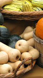 Pumpkins. Lots of pumpkins still life Stock Photo