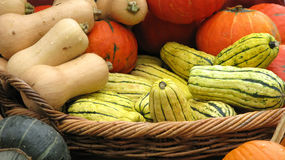 Pumpkins. Lots of pumpkins still life Stock Image