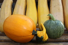 Pumpkins. Various types of nice pumpkins Royalty Free Stock Photo