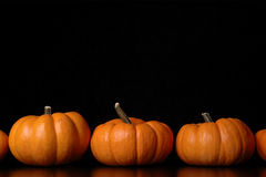 Pumpkins. A row of pumpkins against a black background Royalty Free Stock Photography