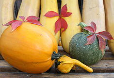 Pumpkins. Various types of pumpkins and autumn leafs Royalty Free Stock Photo