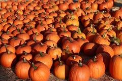 Pumpkins. Market at Half Moon Bay Stock Photo