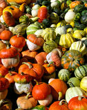 Pumpkins. Colourful pumpkins from Ukrainian garden Royalty Free Stock Photography