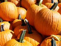 Pumpkins. Pile of pumpkins on sale for Halloween Stock Photography