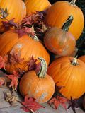 Pumpkins. With red fall leaves around Royalty Free Stock Photos