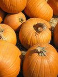 Pumpkins. For sale, fresh from the pumpkin patch royalty free stock images