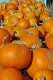 Pumpkins. In bin fresh from the field Royalty Free Stock Photo