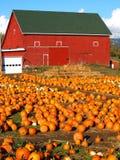 Pumpkins. Stock Photo