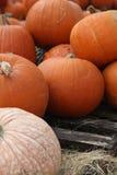 Pumpkins. A variety of pumpkins in a pumpkin patch Stock Photo