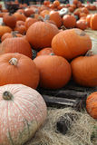 Pumpkins. A variety of pumpkins in a pumpkin patch royalty free stock image