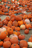 Pumpkins. A variety of pumpkins in a pumpkin patch royalty free stock photo