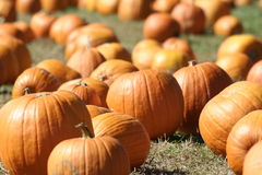 Pumpkins. Photograph of a pumpkin patch Royalty Free Stock Photography