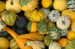 Pumpkins. Background royalty free stock photography
