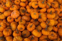 Pumpkins 2 Royalty Free Stock Image