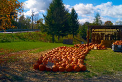 Pumpkins 2 Royalty Free Stock Photos