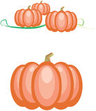 Pumpkins. A  illustration of pumpkins my use for the seasonal cards or calendars Royalty Free Stock Photography