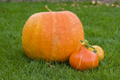 Pumpkins. Still life on grass Royalty Free Stock Photos