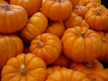 Pumpkins. Full frame view of a stack of whole pumpkins with stems Royalty Free Stock Photo