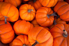 Free Pumpkins Stock Photo - 23102850