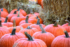 Pumpkins. Orange pumpkins in October, Shallow focus Royalty Free Stock Photos