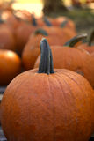 Pumpkins. Image of a bunch of pumpkins Royalty Free Stock Photos