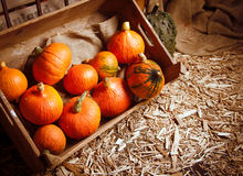 Pumpkins. In a crate on a straw background for fall concepts stock photography