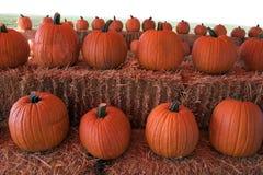 Pumpkins. Halloween Pumpkins Stock Image