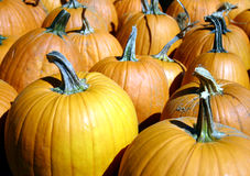 Pumpkins. A background of pumpkins at a pumpkin patch Stock Photo