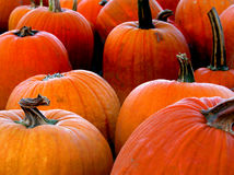 Pumpkins. Picks and ready for sale royalty free stock images