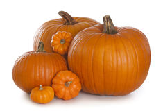 Free Pumpkins Stock Images - 26624924