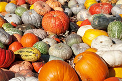 Free Pumpkins Royalty Free Stock Images - 26691209