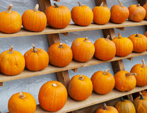 Pumpkins. Some fresh and beautiful Pumpkins Royalty Free Stock Photos