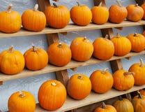 Pumpkins. Some fresh and beautiful Pumpkins royalty free stock photos