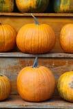 Pumpkins. Orange pumkins ready for Halloween Stock Photography
