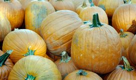 Pumpkins. In the fall Royalty Free Stock Image