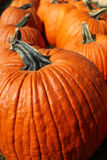 Pumpkins. A group of fall harvest pumpkins stock photo