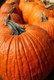 Pumpkins. A group of fall harvest pumpkins Stock Photo