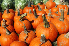 Pumpkins. A group of fall harvest pumpkins Stock Image